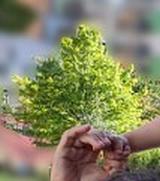 main adulte et main enfant avec arbre derrière